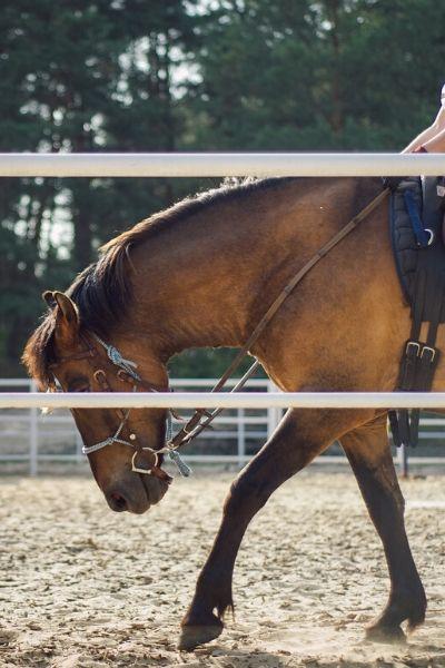Centre-Equestre-Poney-Club-Eperon-de-Lantilly